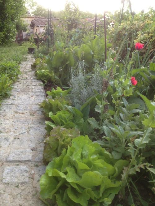 jardin debut juin 012